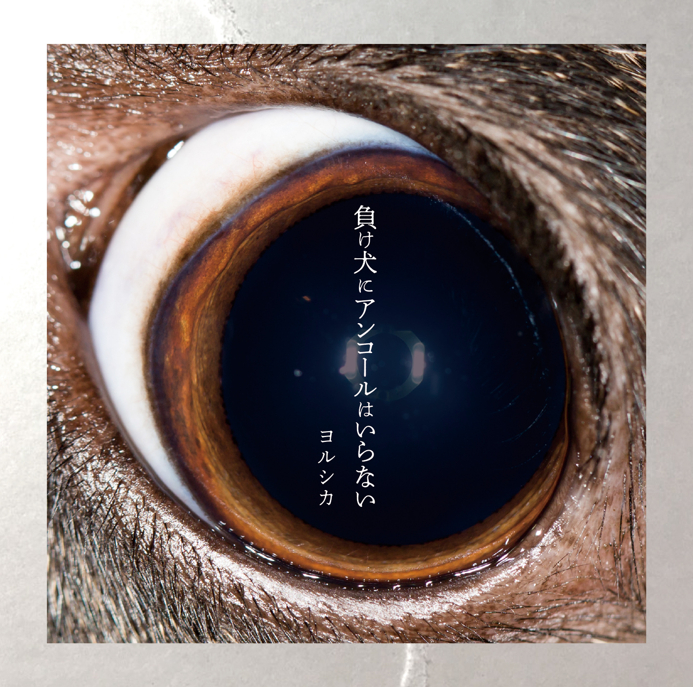 【ALBUM】2nd Mini Album「負け犬にアンコールはいらない」